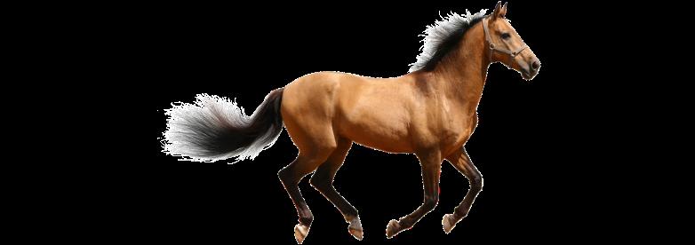 racehorse-live-cargo